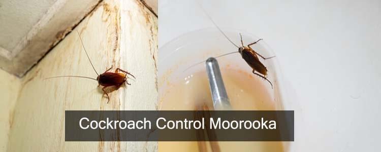 Cockroach Control Moorooka